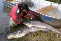 Barco pesca de alumínio (126)
